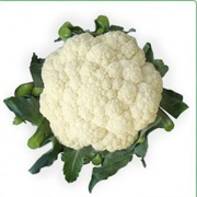 Семена цветной капусты VANZA F1 / ВАНЗА фирмы Китано