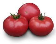 Семена розового томата KS 38 F1 фирмы Китано