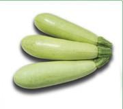 Семена кабачка KS 35 F1 фирмы Китано
