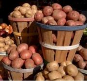 Продаю сортовой посадочный картофель